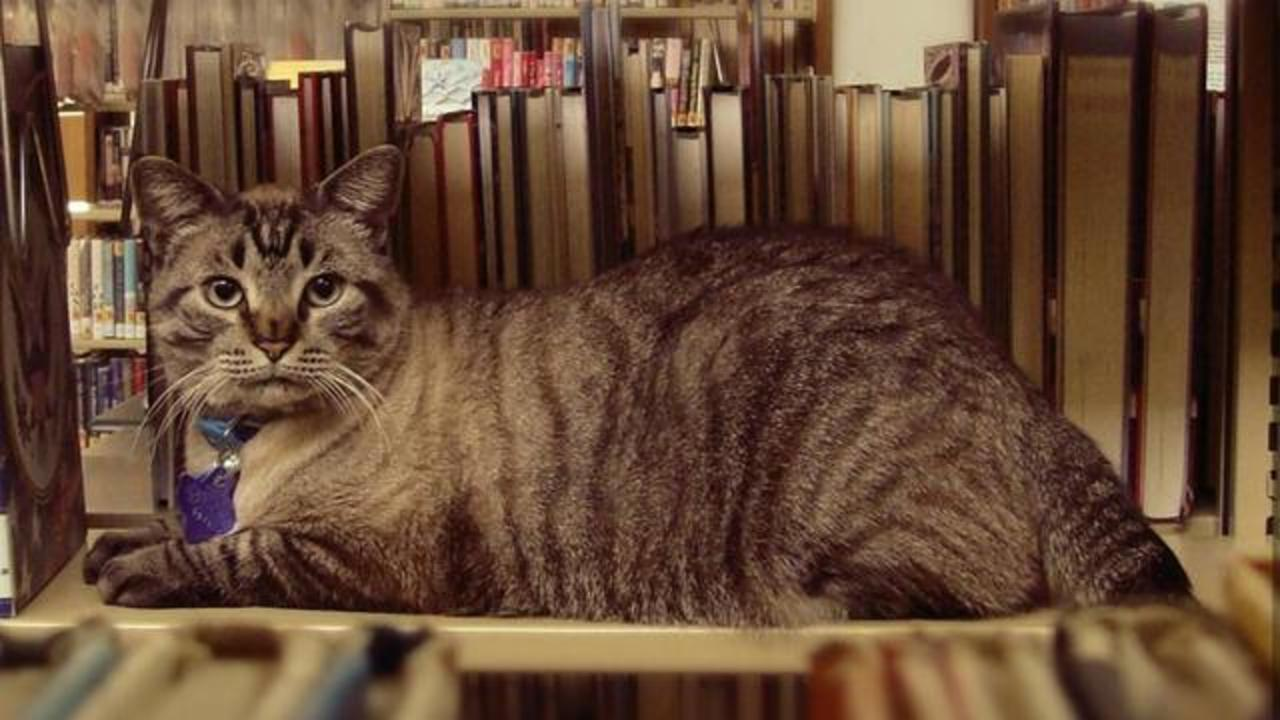 Internet Rallies For Cat About To Lose His Library Job And Home