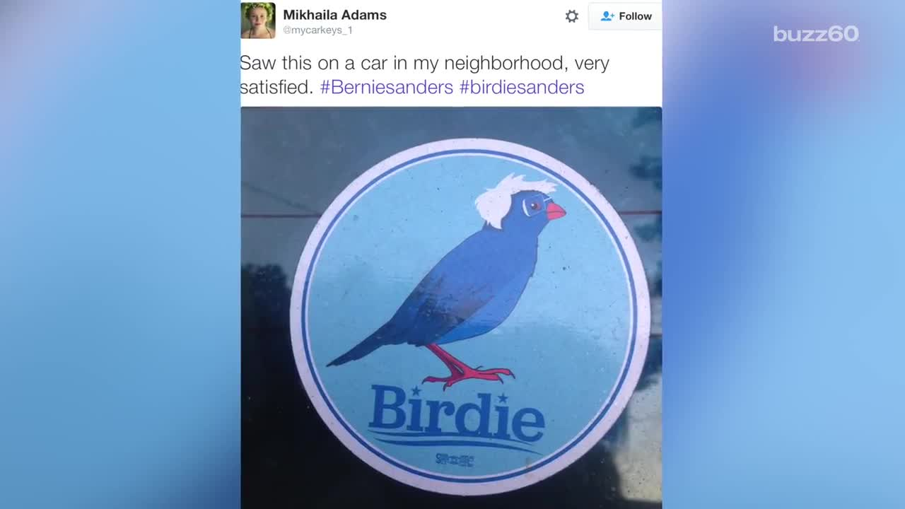 'Birdie Sanders' Political Run May Be Stronger Than Bernie's