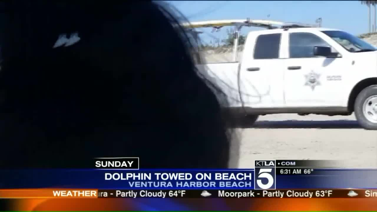 Officials Defend Towing Dead Dolphin Across California Beach
