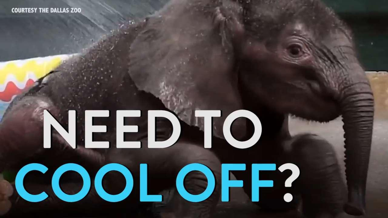 Baby Elephant Loves the Kiddie Pool
