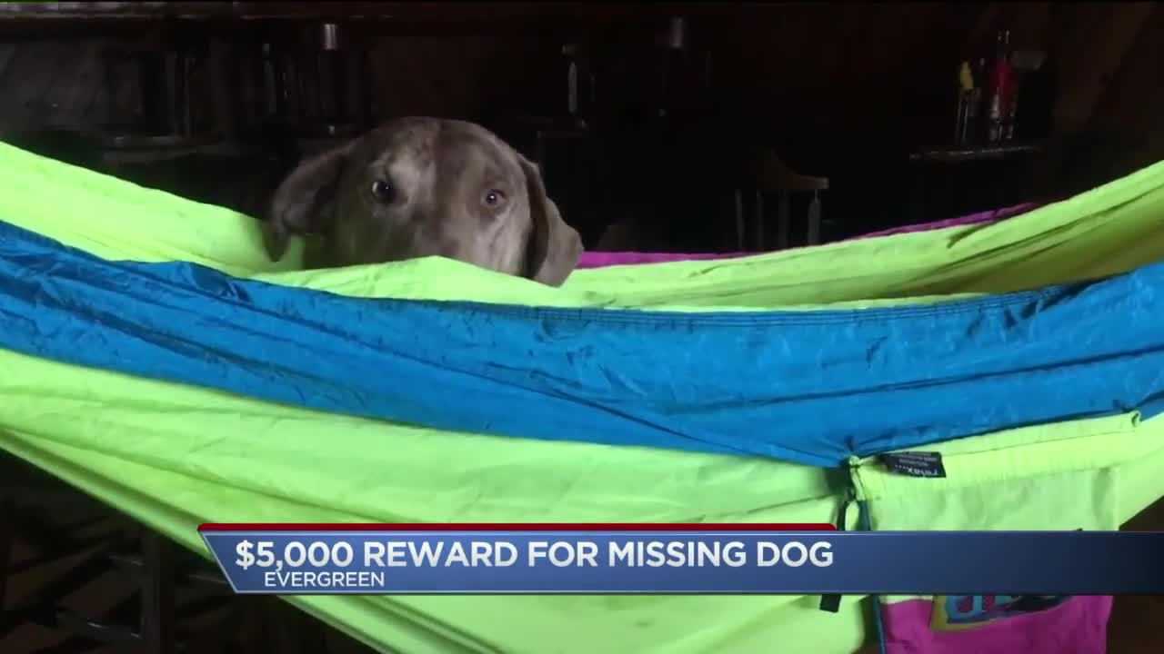 Colorado Restaurant Offering $5,000 Reward for Missing Dog