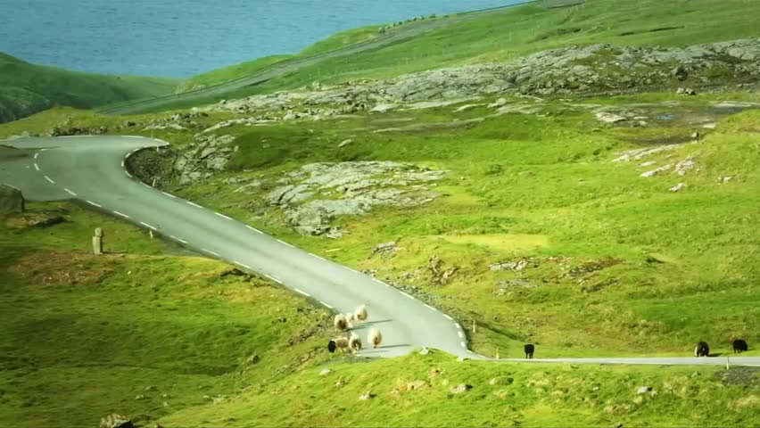 Faroe Islander straps cameras to sheep to give islands Google 'sheep view'