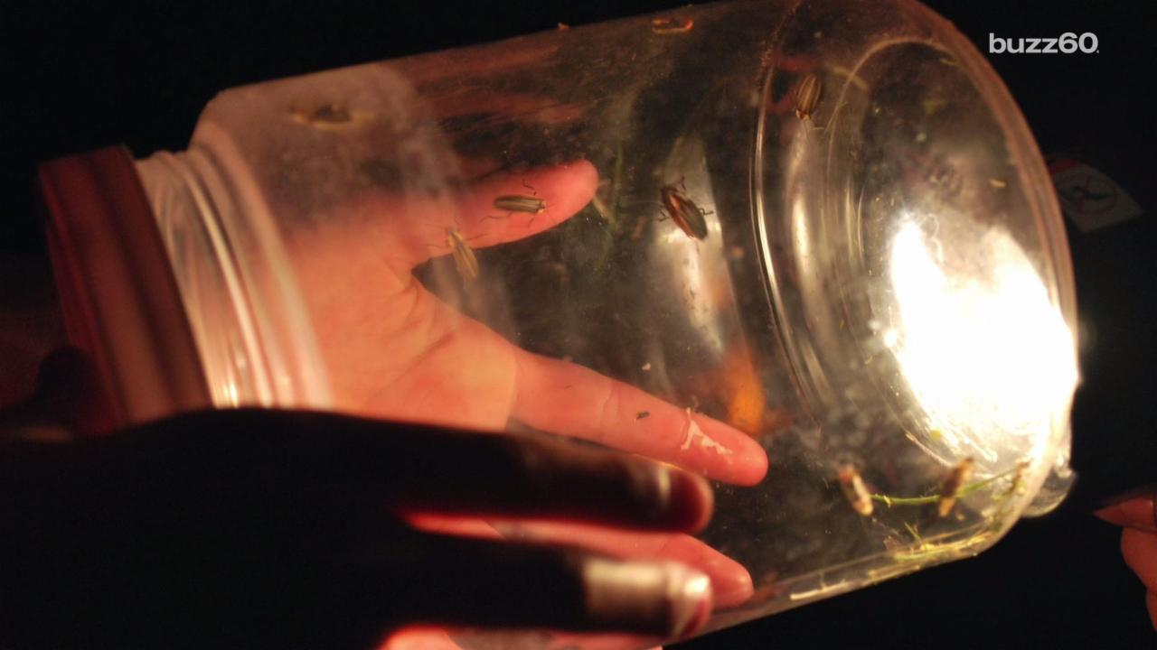 Why you May Not See as Many Fireflies This Summer