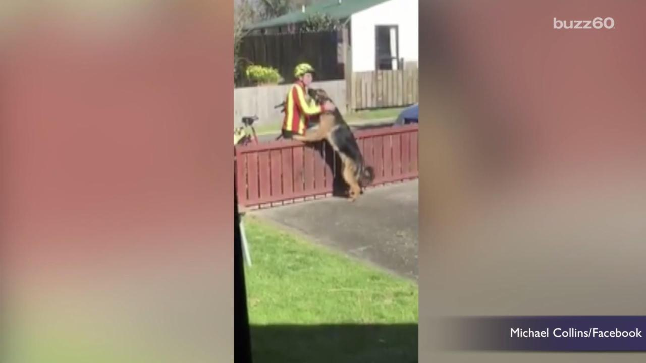 Mailman shares heartwarming routine with dog