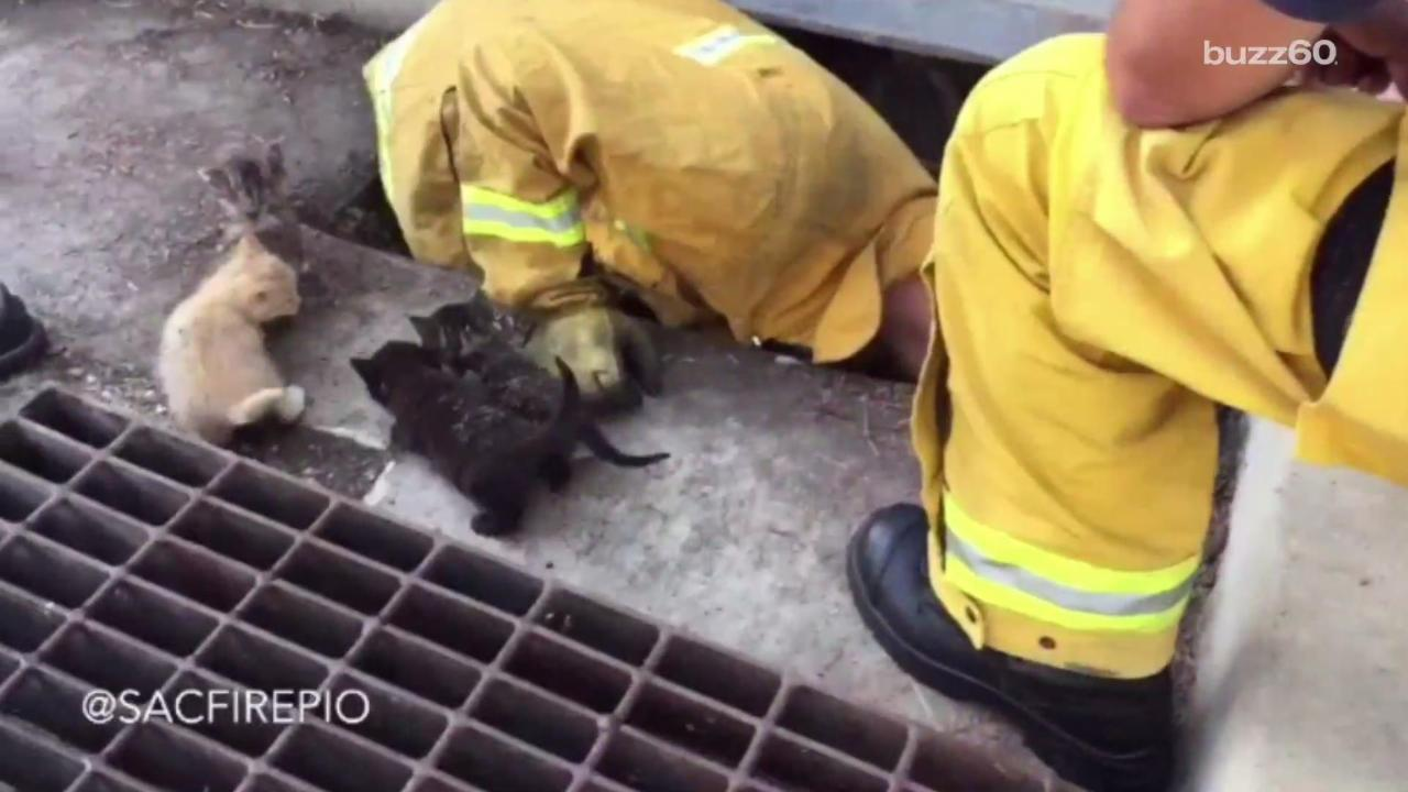 Firefighters Rescue 8 Kittens From Storm Drain