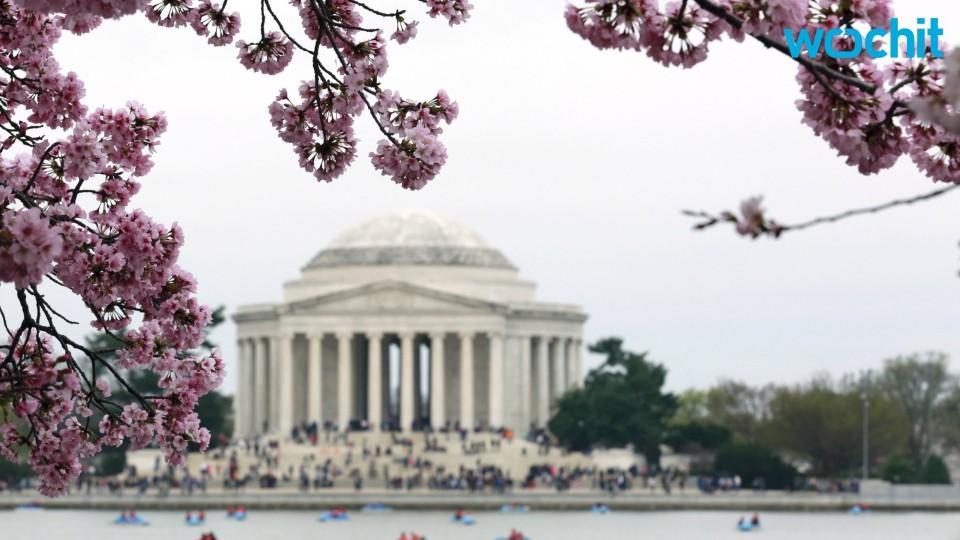The Jefferson Memorial Is Covered In Organic Scum