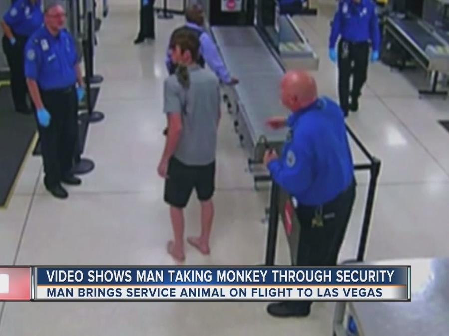 Video shows monkey at airport