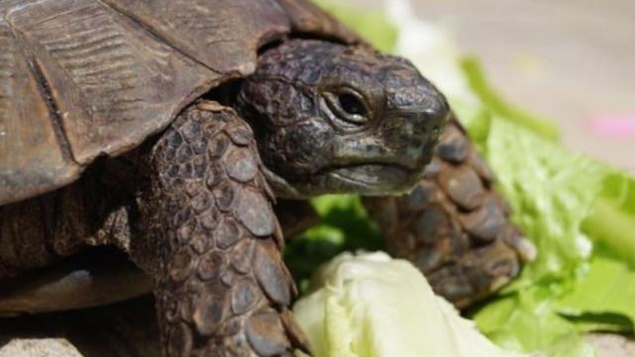 A 90-Year-Old Pet Tortoise Was Reunited With Owner After Ending Up On Garbage Truck