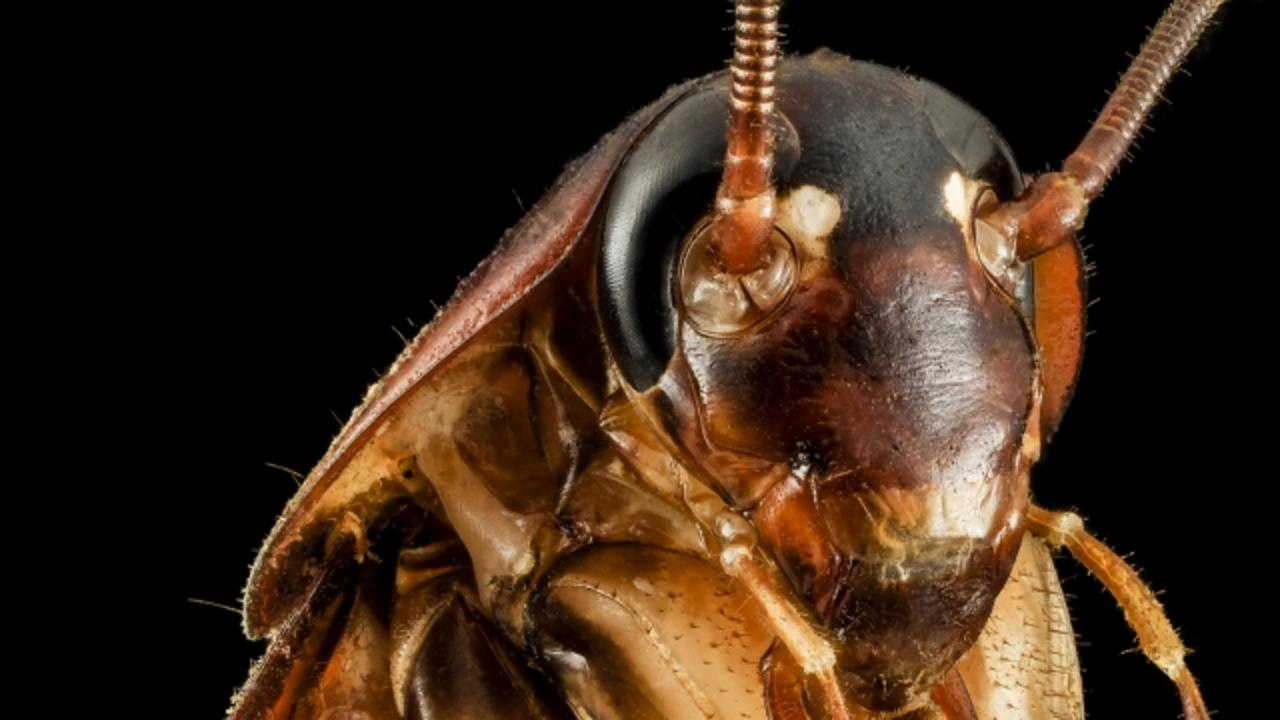 Heat Wave in New York Makes Cockroaches Want to Fly