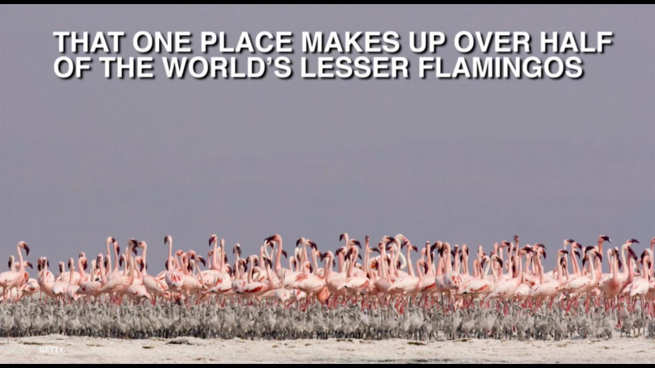 This one lake is so deadly it kills almost everything except flamingos