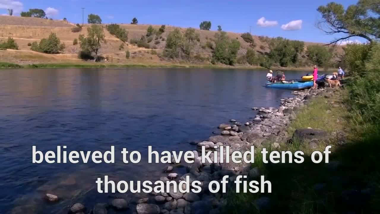 Yellowstone River Closed Over Parasite Threat