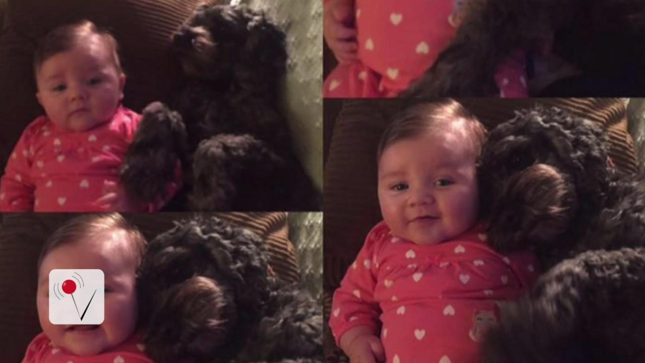 Dog Dies Saving 8-Month-Old Baby in House Fire