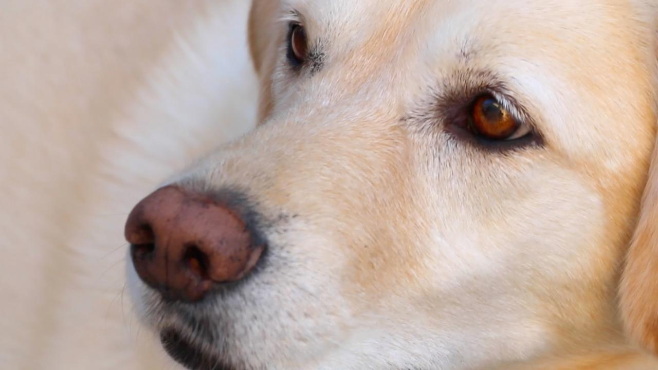 Report: Pets Could Be Source Of Superbug Transmission