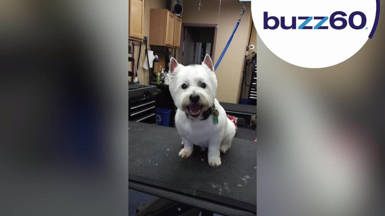 Dog Groomer Caught Dancing With Furry Pup Will Melt Your Heart