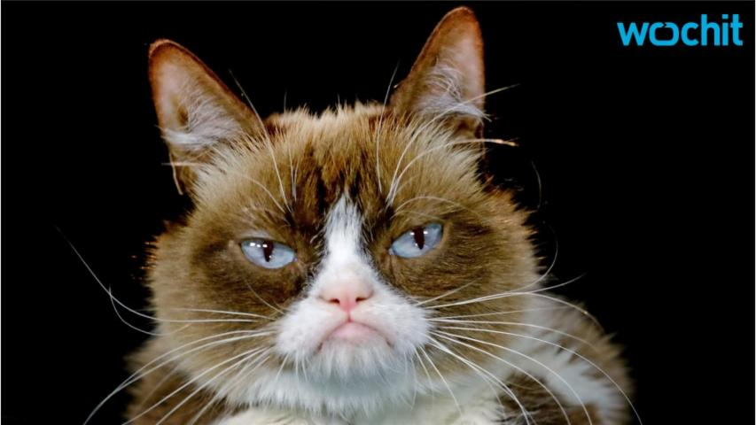Grumpy Cat To Join Disney Channel