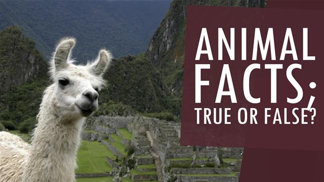 Animal Facts: True or False?