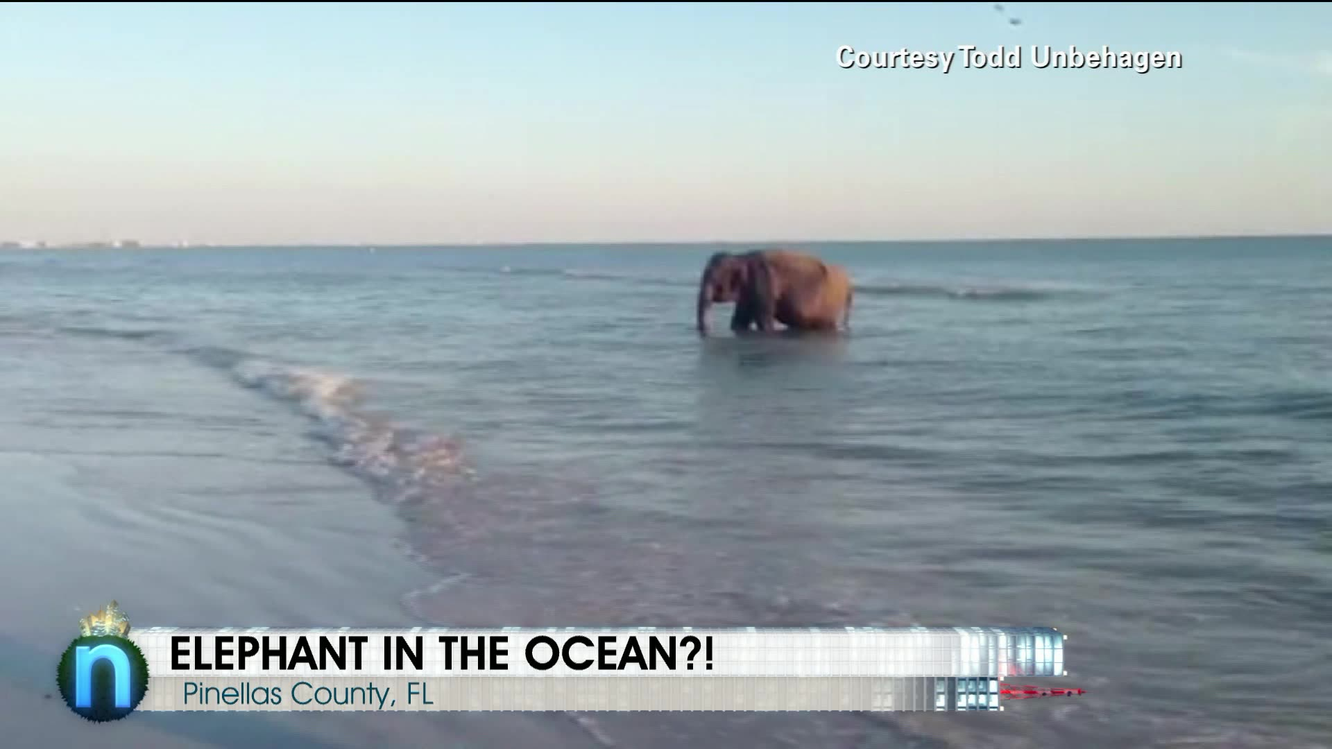Elephant Takes a Dip in Ocean
