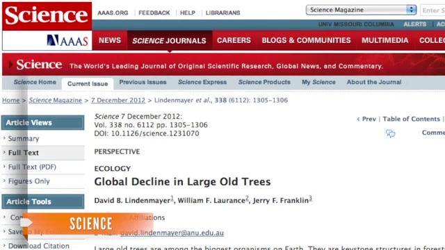 Study Shows World's Biggest Trees Dying Quickly