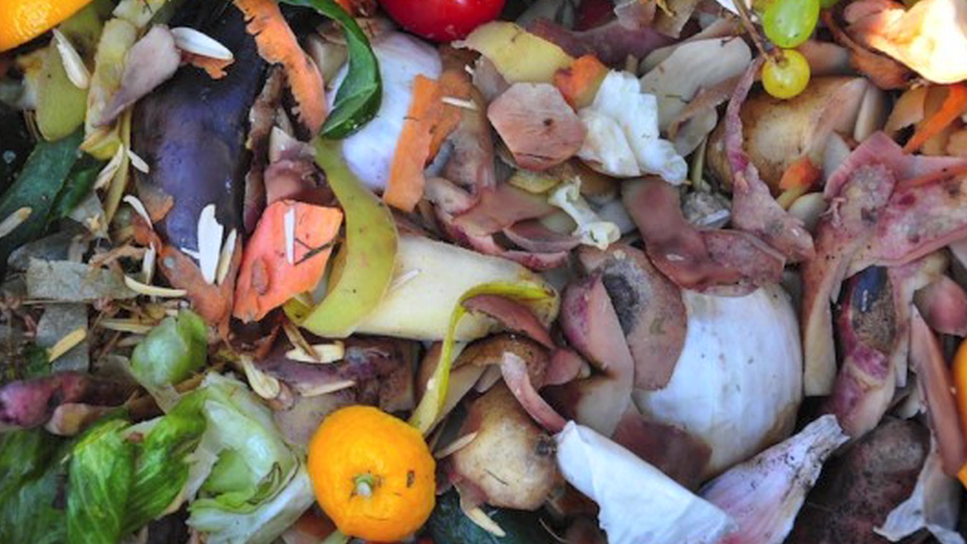 Half of World's Food Is Wasted