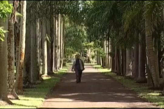 Visit the Botanical Gardens in Mauritius