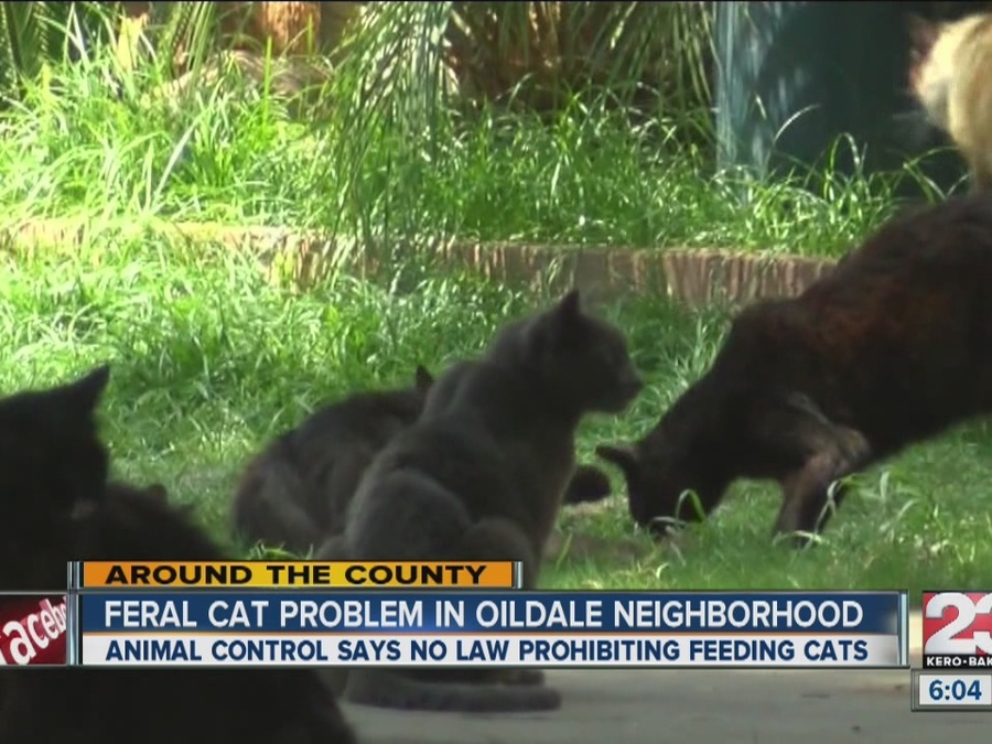 Cats Take Over Oildale Neighborhood