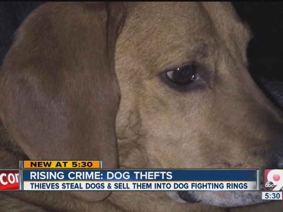 Rising Crime: Dog Thefts