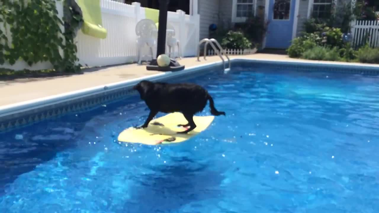 Dog Jumps Onto Surfboard in Pool, Rides It to Fetch Ball!