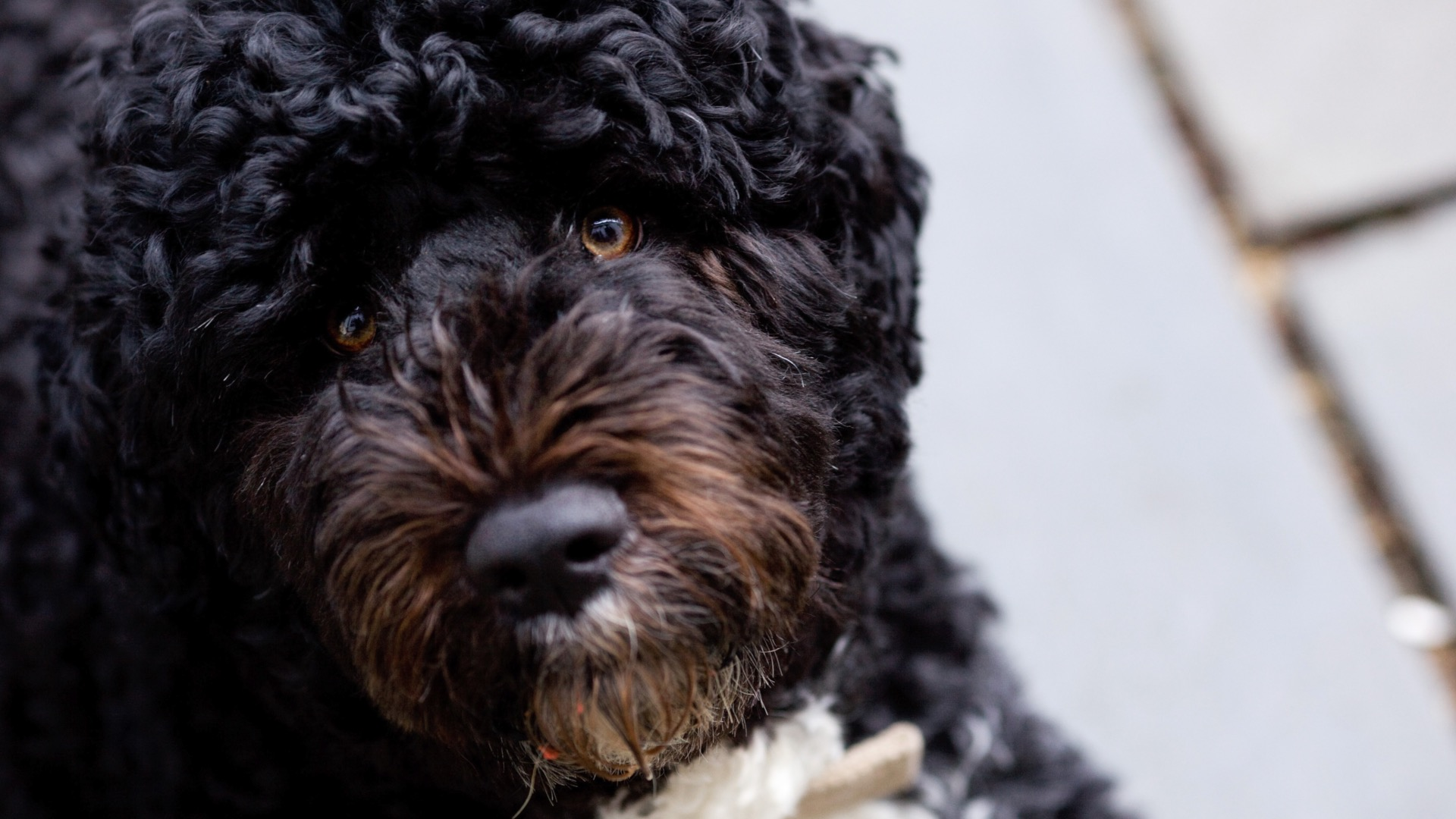 Man Accused Of Plotting To Kidnap Obamas' Dog