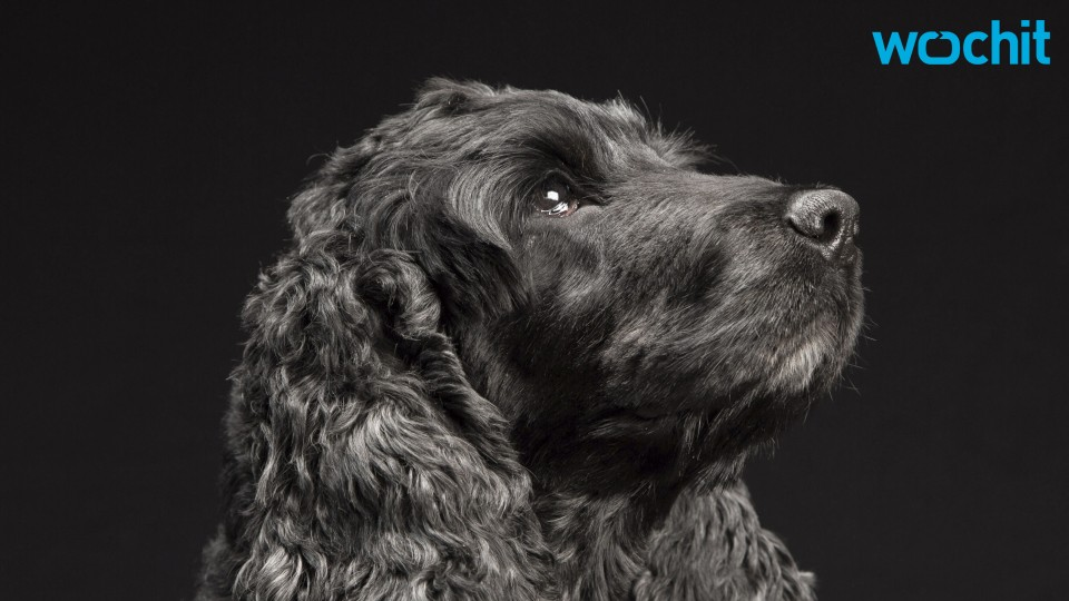 New Study Says Dogs Can Recognize Human Emotions