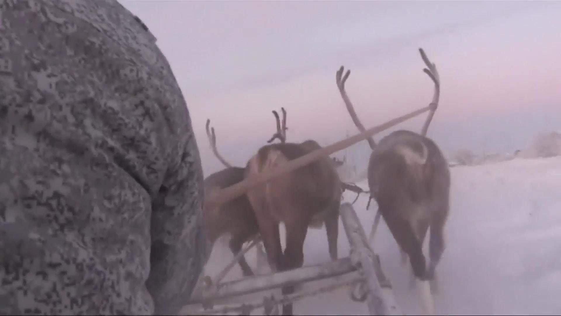 Russia's Arctic Troops Train with Husky Dogs and Reindeer in the Snow
