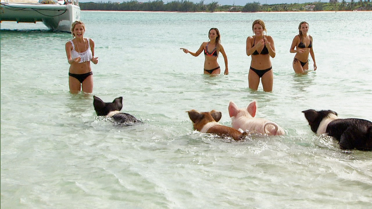 'The Bachelor': The Bachelor Goes Swimming with Pigs!