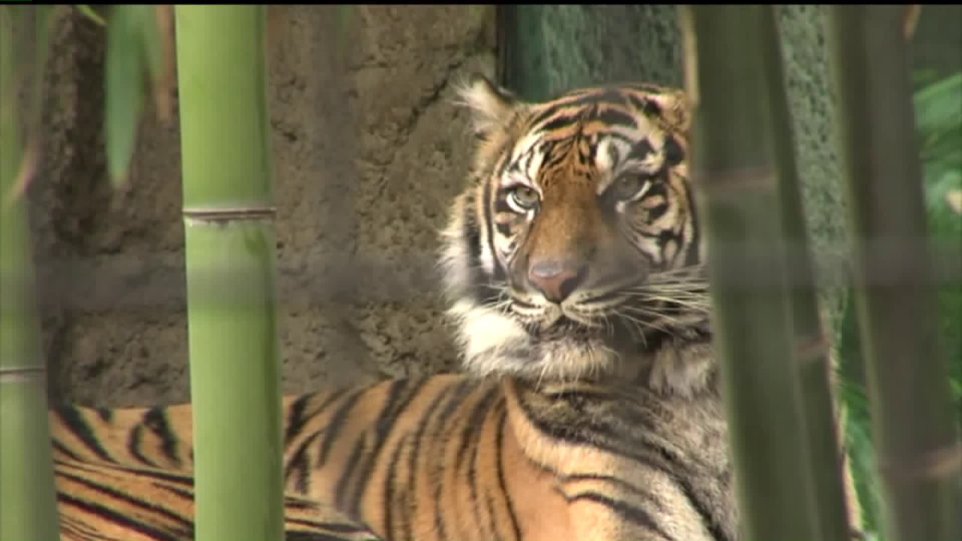Activists 'Not Surprised' by Tiger's Death at Sacramento Zoo