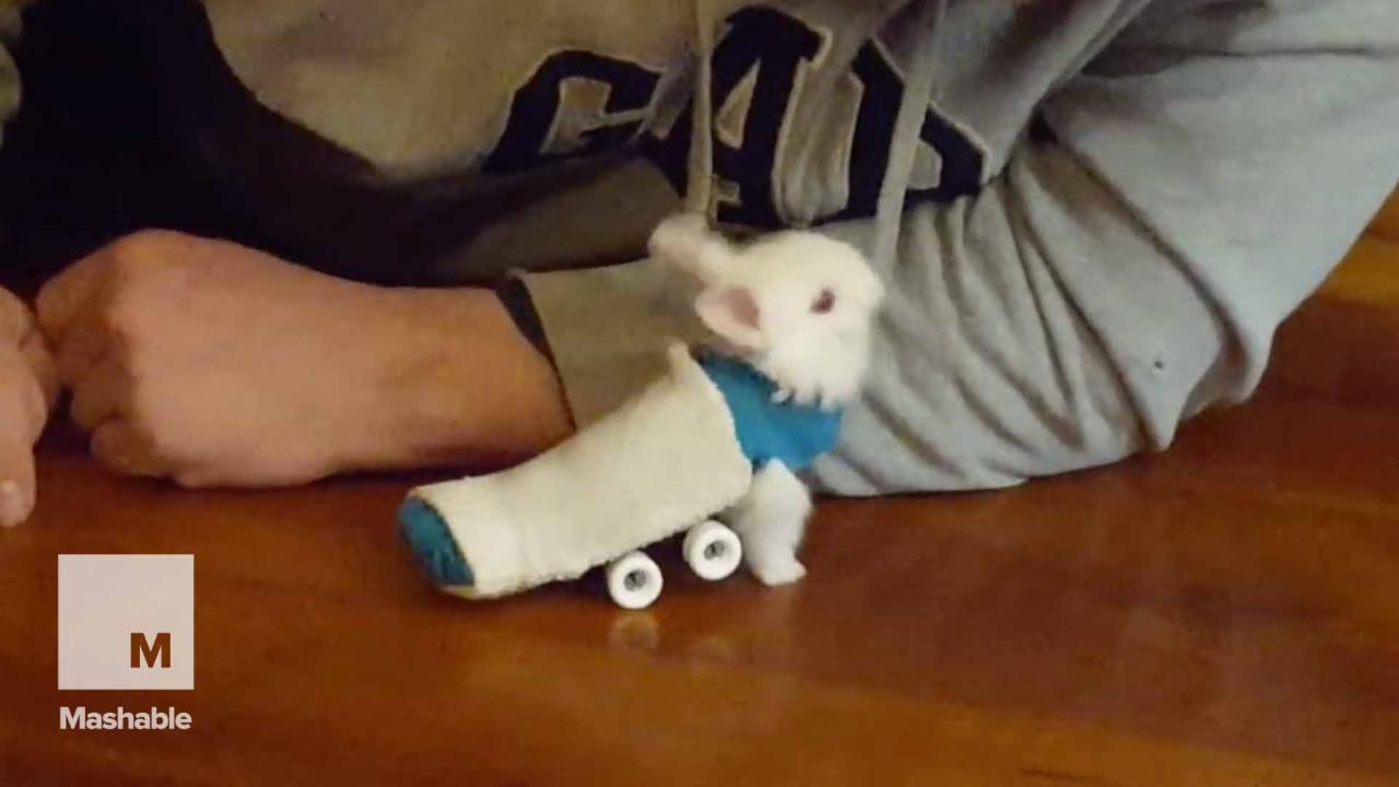 Paralyzed baby bunny gets a sweet custom 4-wheeled ride