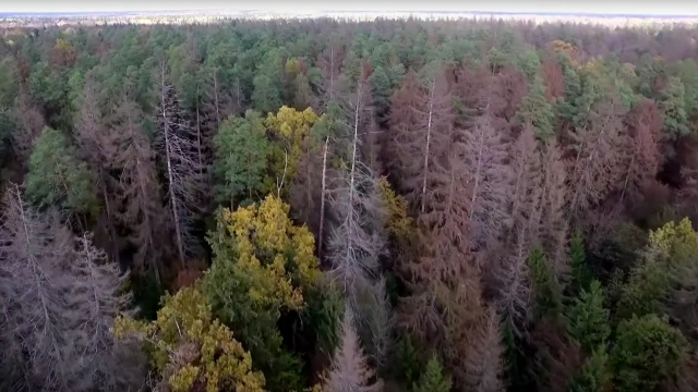 Poland Wants to Log a Big Chunk of Europe's Last Primeval Forest