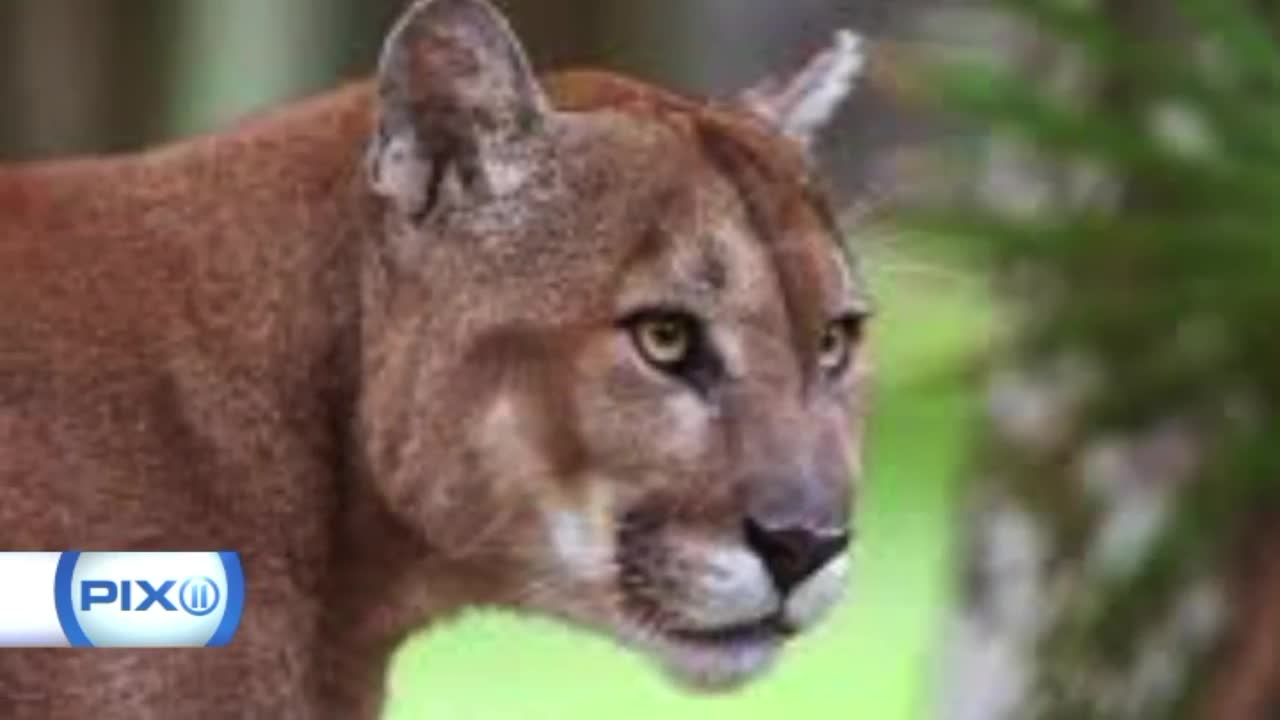 Florida Woman Captures Terrifying Encounter With Panther