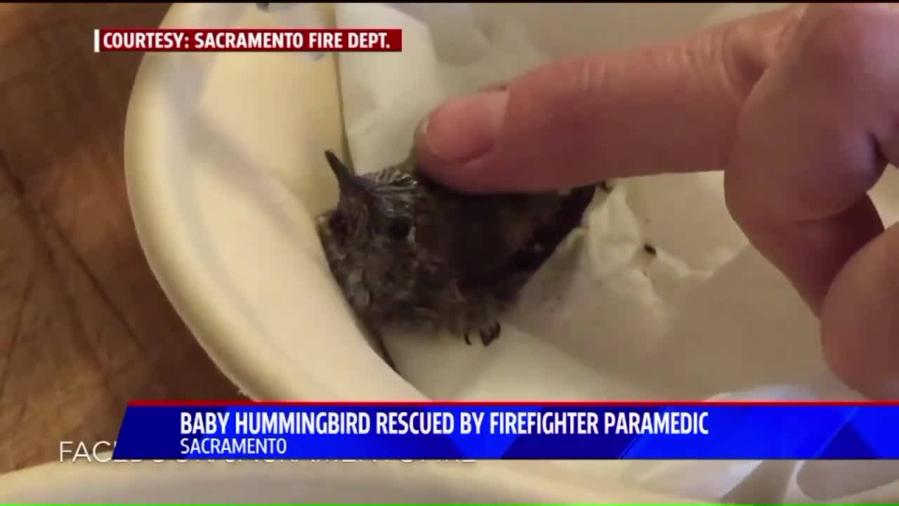 Firefighter Rescues Baby Hummingbird