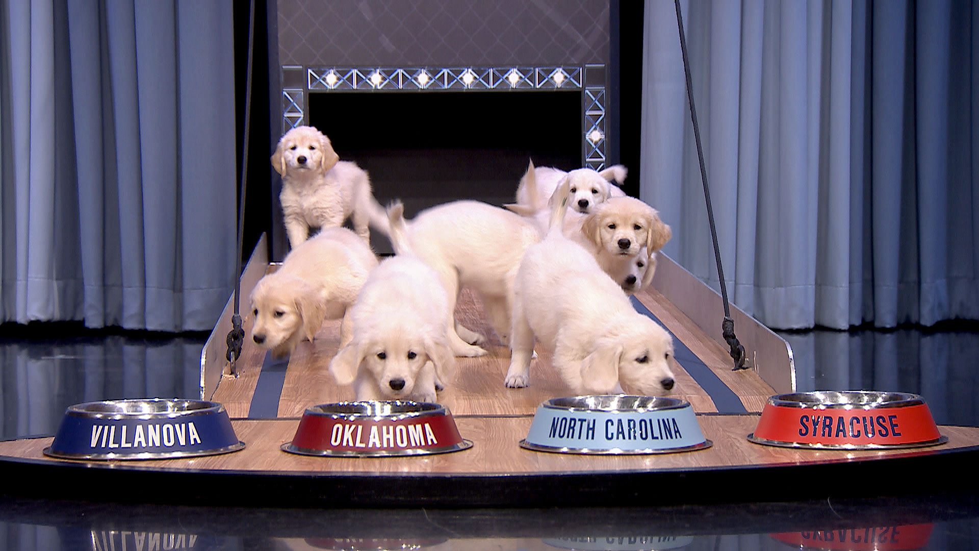 Puppies Predict the 2016 Final Four Championship