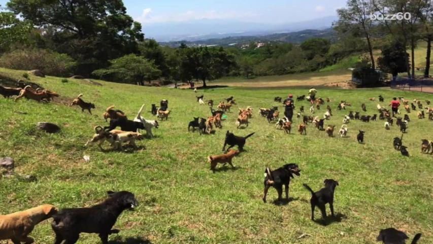 'Land of the Strays' is home to 900 dogs and you can visit and adopt them