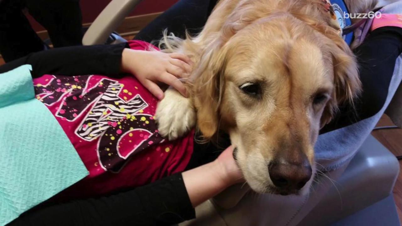 Dentist's office hires comfort dog to help calm patients