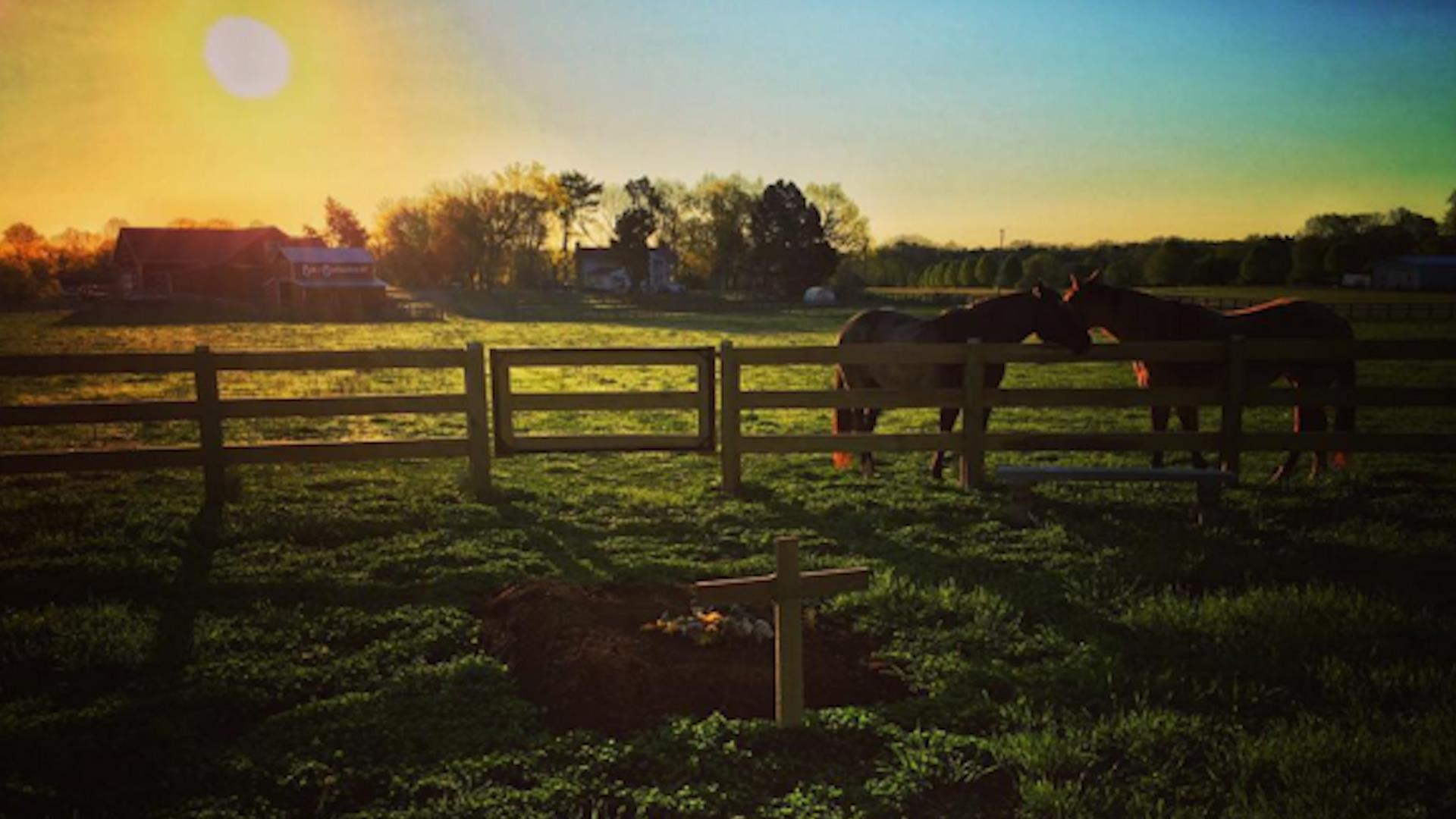 Rory Feek Shares Moving Photo of Joey's Resting Place Along with Song Lyrics