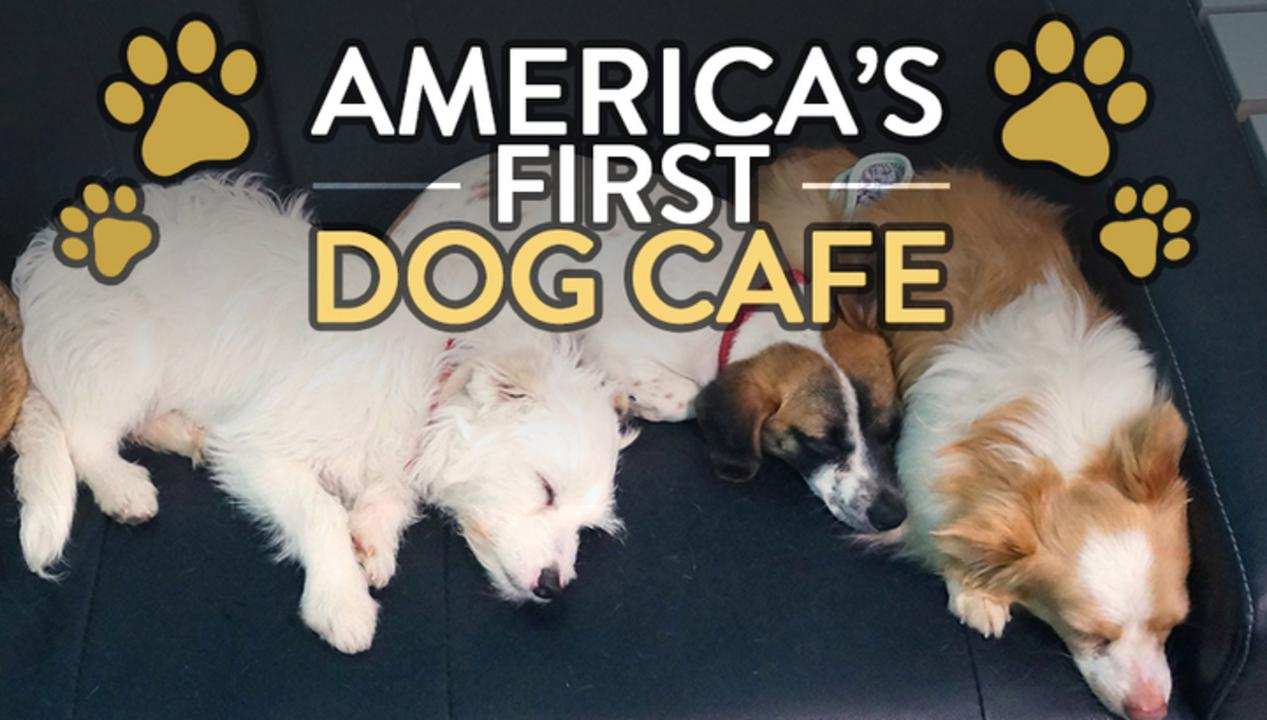 America's First Dog Cafe
