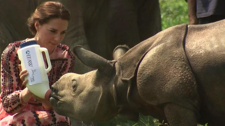 Watch Kate & William Feed Baby Animals on Indian Safari