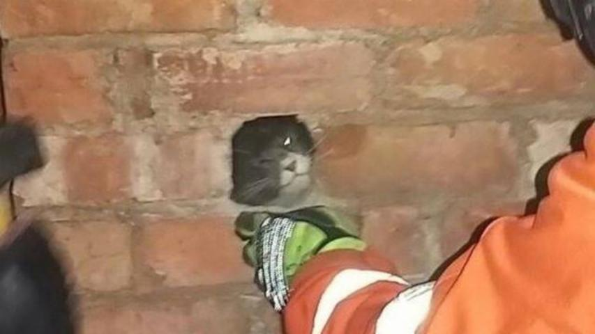 Firefighters Avert A 'Cat-Astrophe,' Rescue Kitty Stuck In Chimney