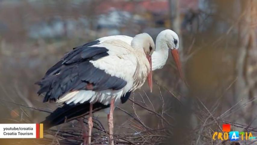 Stork Travels 8,000 Miles Every Year To Be With Female Partner