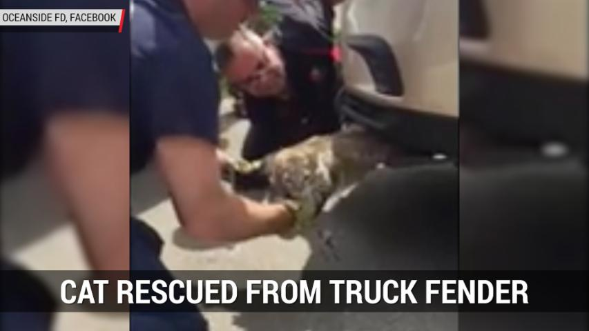 Cat Rescued From Truck Fender | Autoblog Minute