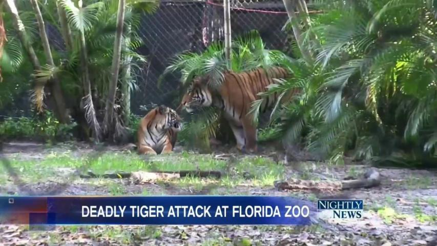Tiger Mauls Zookeeper to Death at Florida Zoo
