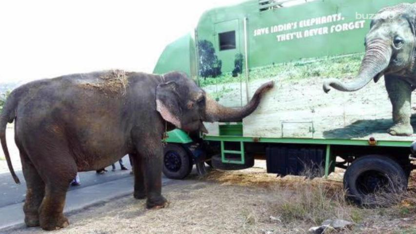 Freedom Looks Good on Former 50-Year Circus Elephant