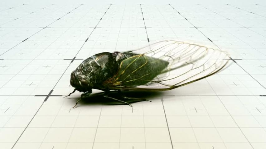 Cicadas set to emerge after 17 years underground