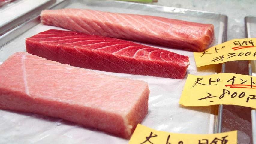 Pacific Bluefin Tuna Population Reaches Record Low