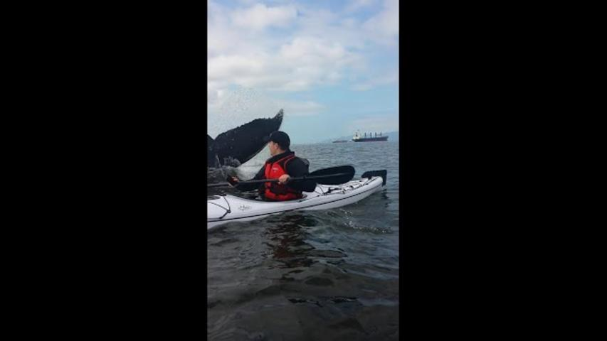 Kayaker's Extremely Close Encounter with Whale in Vancouver Bay